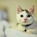 Male Kitten Sitting On Bed by Nazra Zahri