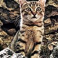 Mediterranean Wild Babe Cat by Stelios Kleanthous