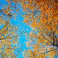 Meet In Heaven. Autumn Glory by Jenny Rainbow