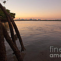 Miami And Mangroves by Matt Tilghman