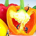 Mining in colorful peppers Print by Paul Ge