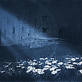 Moon Light Daisies by Svetlana Sewell
