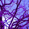 Moon Tree Purple by First Star Art