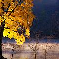 Morning Maple Ll by Rob Travis