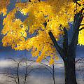 Morning Maple by Rob Travis