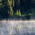 Morning Mist by Mike  Dawson