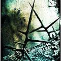 Mortal Combat by Judi Bagwell