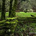 mossy fence 2 Print by Bob Christopher