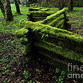 Mossy Fence 5 Print by Bob Christopher