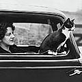 Motoring Cat by Fox Photos