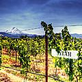 Mt Hood Winery by Vicki Jauron