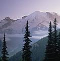 Mt Rainier As Seen At Sunrise Mt by Tim Fitzharris