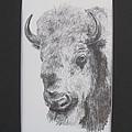 Museum Animals Bison