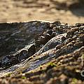 Mussels Sunset by Henrik Lehnerer