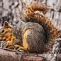 My Nut by Robert Bales