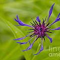 Mystery Wildflower 1 by Sean Griffin