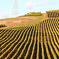 Napa Valley Vineyard . 7d9065 by Wingsdomain Art and Photography