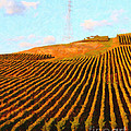 Napa Valley Vineyard . Portrait Cut by Wingsdomain Art and Photography