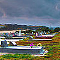 Narooma Cemetery by Joanne Kocwin