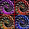 Nautilus Shell Ying And Yang - Electric - V1 - Four Squares by Wingsdomain Art and Photography