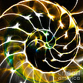 Nautilus Shell Ying And Yang - Electric - V1 - Gold by Wingsdomain Art and Photography