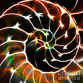 Nautilus Shell Ying And Yang - Electric - V1 - Orange by Wingsdomain Art and Photography