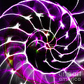 Nautilus Shell Ying And Yang - Electric - V1 - Violet by Wingsdomain Art and Photography