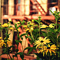New York City Flowers Along The High Line Park by Vivienne Gucwa