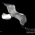 Night Flight by Dale   Ford