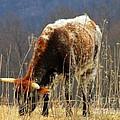 No Bull by Joyce Kimble Smith