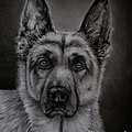 Noble - German Sheph...