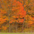 Northeast Fall Colors by Stephen  Vecchiotti