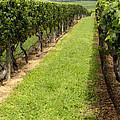 Northfork Vineyard by Leslie Leda