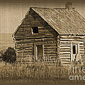 Old Hunting Cabin - Wyoming Print by Donna Van Vlack