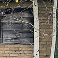 Old Window And Aspen Print by James Steele