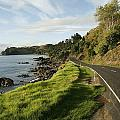 On The Road Around The Coromandel by Dawn Kish