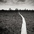 On The Swamp by Konstantin Dikovsky