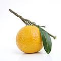Orange Satsuma by Bernard Jaubert