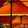 Orange Sliced Umbrellas by Karen Wiles