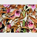 Orchids in Bloom Print by Mindy Newman