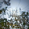 Pablo's Web by Gwyn Newcombe