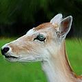 Painted Deer by Mariola Bitner