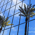 Palm Trees Reflection On Glass Office Building by Paul Velgos