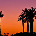 Palms Silhouettes at Sunset Print by Nadya Ost