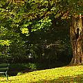Park Bench Beside The Owenriff River In by Trish Punch