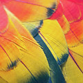 Parrot Feathers by Flash Parker