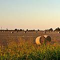 Peanut Field Bales 1 by Douglas Barnett