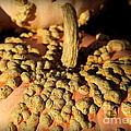 Peanut Pumpkins by Karen Wiles