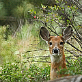 Peek A Boo by Ernie Echols