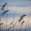 Pensacola Beach Sea Oats by Steven Gray